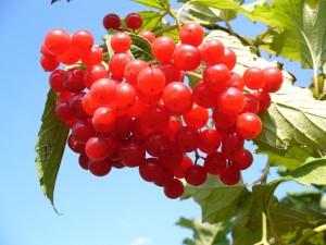 cranberry-93747_960_720