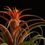 Sobne rastline (Vir: Pixabay)