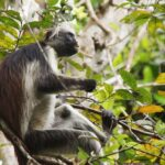 Odkrivanje raznolikosti, ki jih ponuja Zanzibar